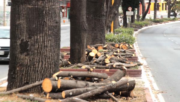 Podas radicais destroem as árvores e pioram a qualidade do ar