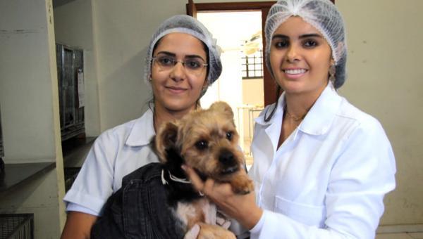 Castração de cães e gatos, medida de saúde pública