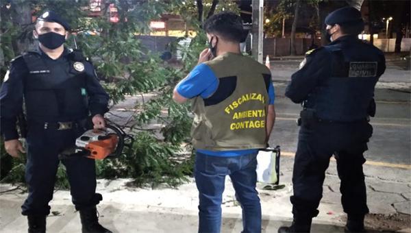 Flagrante de supressão irregular de árvores em Contagem