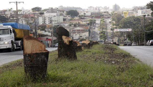 Dezenas de árvores são cortadas para dar lugar a trincheira