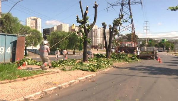 Cortes de árvores desagradam população e ambientalistas