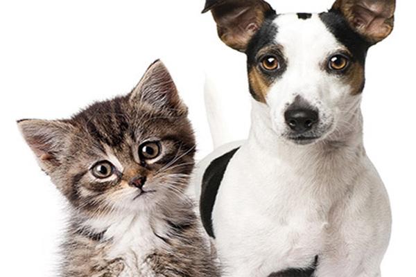 Feira de ado o de c es e gatos no big shopping for Red transparente para gatos